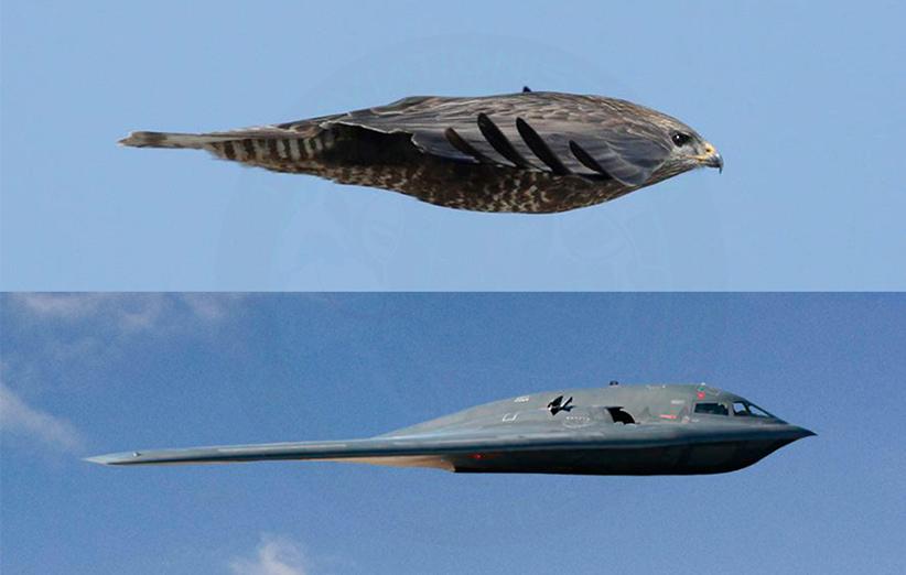 هواپیماها چقدر شبیه پرندگان هستند؟