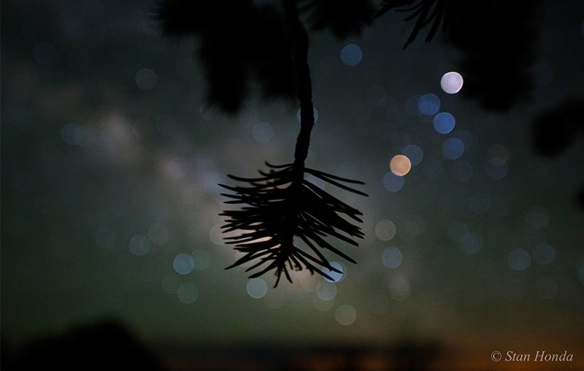 تصویر نجومی روز ناسا (۳ دی ۹۴): رنگ ستارگان و کاج پینیون